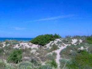 Dune_Tirrenia